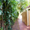 Path from Bamboo, Plumeria and Mango Studios