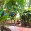 Path to Bamboo, Plumeria and Mango Studios